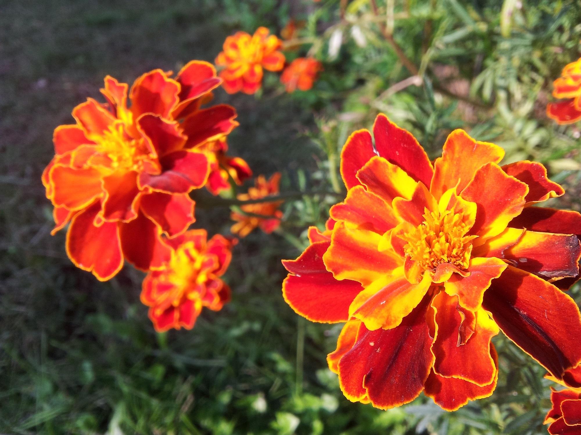 Fondos de pantalla rom nticas flores buscar pareja - Como conseguir color naranja ...