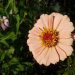 Wallpaper flor naranja claro