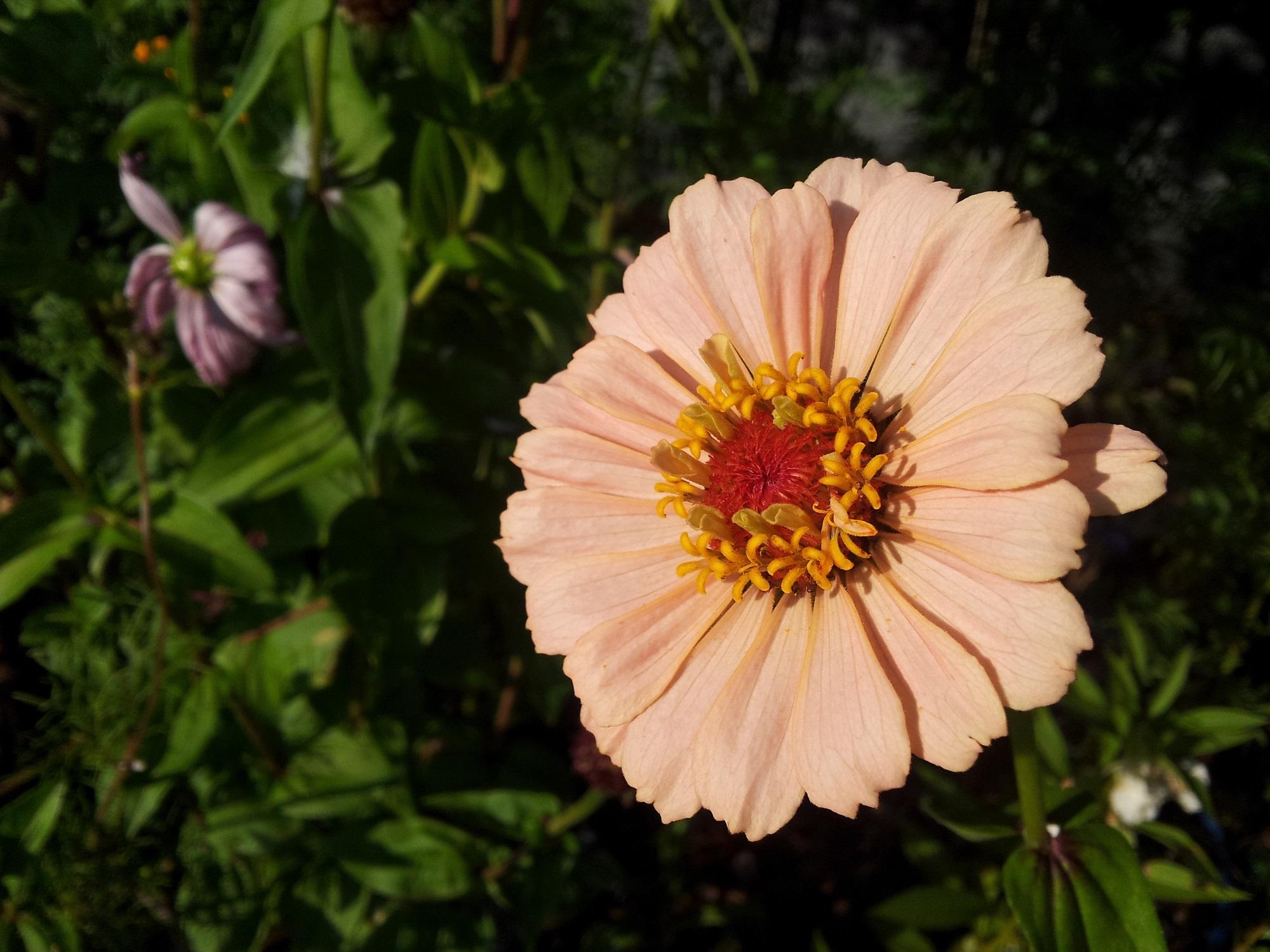 Fondos De Pantalla Romanticas Flores Buscar Pareja Estable