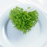 Fondo de pantalla de amor: corazón de lechuga