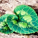 Wallpapers de primavera hojas verdes con forma de corazón