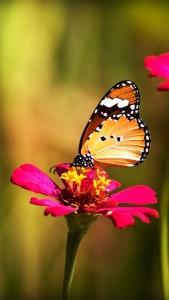 Fondo de Pantalla móvil mariposa posada en flor