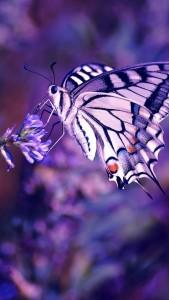 Fondo de pantalla móvil mariposa violeta