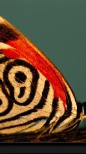 Wallpaper móvil mariposa cebra