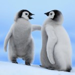 Fondo de pantalla Pareja de pingüinos bebés