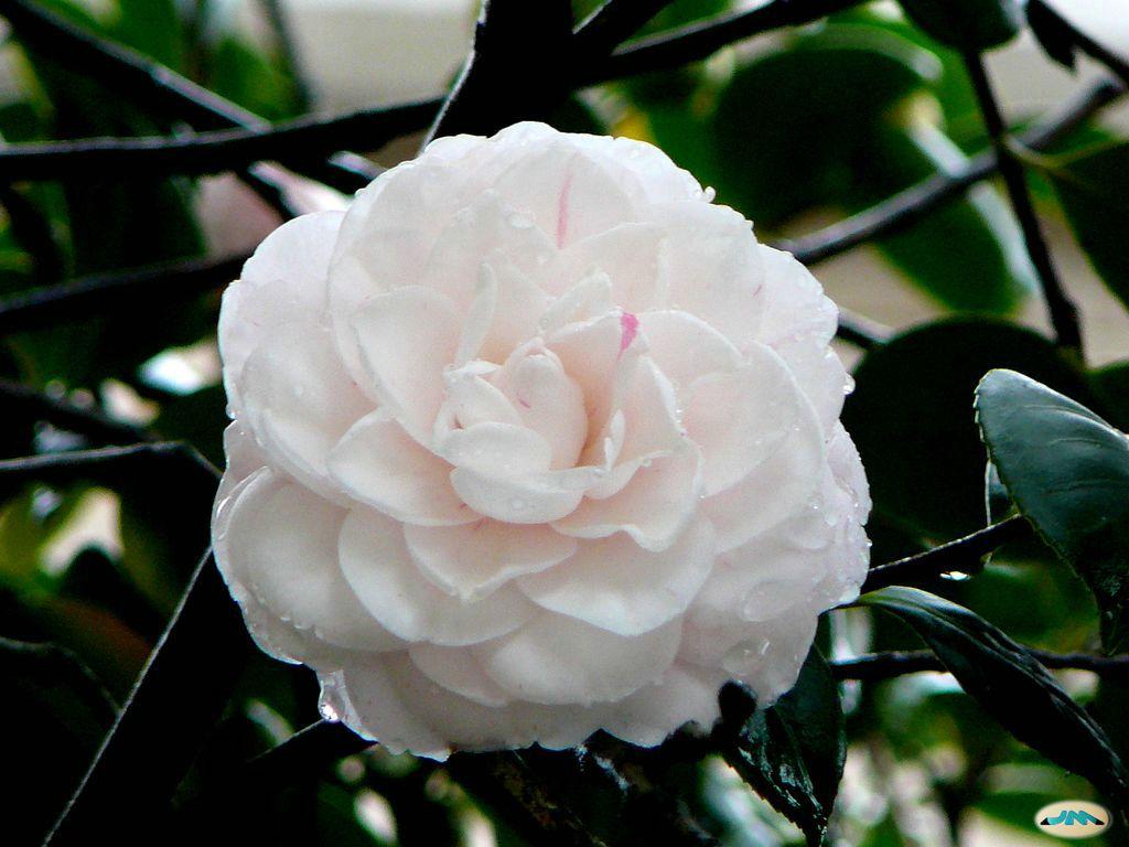 15 Flores Para Regalar Y Su Significado Buscar Pareja Estable