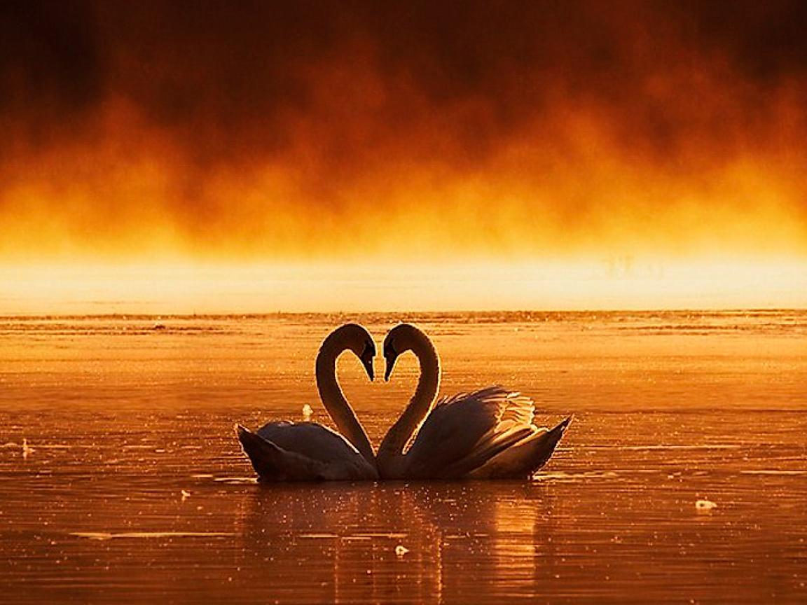 Frases De Amor Mãs De 250 Imãgenes Para Compartir Gratis
