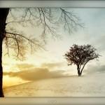 Wallpaper Paisaje de invierno
