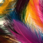Wallpaper para android plumas colores