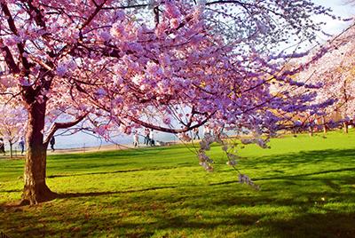 primavera la estación del amor