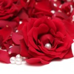 red-rose-and-pearl_1280x960_78293