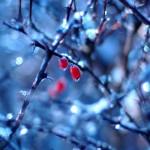 Wallpaper frutos rojos sobre hielo