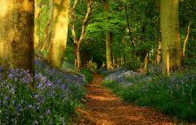 Wallpapers de primavera camino en el bosque con flores