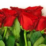 Fondo de Pantalla Rosas Rojas